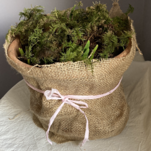 Hessian-wrapped pot (Live plants)